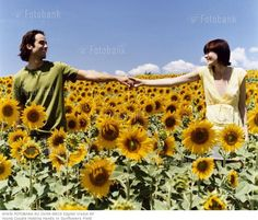 COUPLE SUNFLOWER PICTURES | young couple holding hands in sunflowers field young couple ...