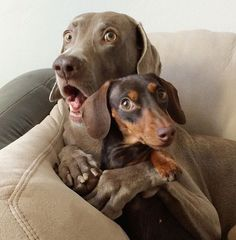 Whenever vacuum is turned on, they huddle together like...