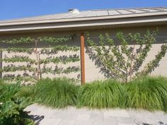 Espalier fruit trees- saves room. Also is a cool blog for Utah landscape ideas.
