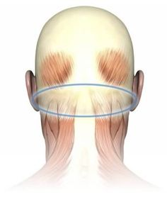 """Trigger points in the suboccipital muscle group are the most common cause of tension headaches. The suboccipitals are also partly """"antagonized"""" (balanced) by the jaw muscles. This is an odd arrangement. Generally speaking you've got one muscle or group of muscles that pulls one way, and then muscles on the other side of the joint that pull the other way. But the jaw muscles do not affect the spinal joints, and cannot directly work against/with the suboccipitals to balance the head…"""