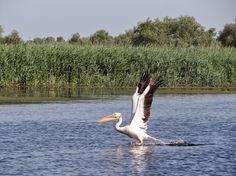 Danube Delta, Romania's unspoilt jewel