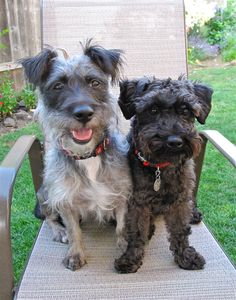 Schnoodles....just cuz we are that, treats please!