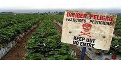"""""""Responsabile di avvelenamento"""": la Corte d'Appello francese conferma sentenza storica contro Monsanto  era tempo! #ciboprossimo"""