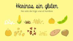 Encontrarás todas las harinas sin gluten para substituir la harina de trigo, sus propiedades y sus mejores usos en cocina...