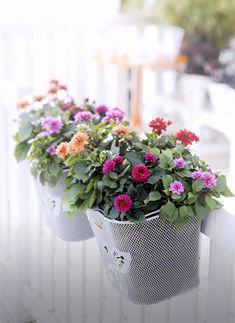 bloemen-fietsmand-balkonbak ★ bike basket balcony planters DIY ★ http://www.homeandgarden.nl/2012/07/05/fietsmand-wordt-balkonbak/#more-169