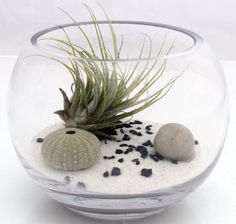 Air plant zen garden terrarium kit with Tillandsia Ionantha, white sand, sea urchin and polished pebble- fish bowl style desktop terrarium. £25.00, via Etsy.