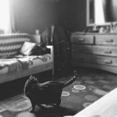 .@andrewvonrose | #vscocam #montreal the cat dreams only of murder | follow me on #instagram