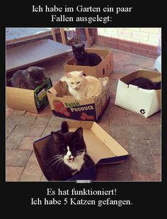 I have funny animals in the garden # - Katzen witze - Cats Animals And Pets, Funny Animals, Cute Animals, Really Funny, Funny Cute, I Love Cats, Cute Cats, Funny Share, Funny Memes