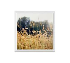 """Summer Field by Cindy Taylor, 25 x 25"""", Ridged Distressed, White, No Mat"""