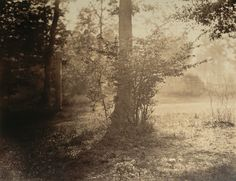 Tree Study, Forest of Fontainebleau ca. 1856 - Gustave Le Gray (French, 1820–1884)