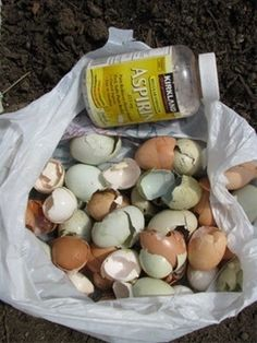 Tomatoes need calcium to achieve their full flavor potential, and calcium is often greatly lacking in our soils. 95% of a dry eggshell is calcium carbonate. When planting your tomato plants crush up ( - Click image to find more diy & crafts Pinterest pins
