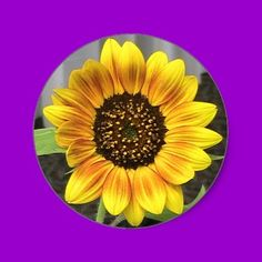 Large Sunflower Stickers- available at www.zazzle.com/westcreek.