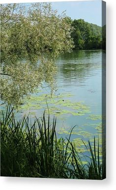 #AnnaMatveeva #Photographers #ForSale #FineArtAmerica #FineArtPrints #ArtHome #Artdecor #Decor #Homedecor #waterscapel #Nature #River #Landscape #WoodPrints #MetalPrint #FogFramedPrint          http://anna-matveeva.pixels.com/