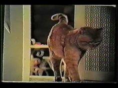 1972 9 Lives Morris the Cat Commercial