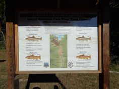 Back to the Lower Mountain Fork River at Beavers Bend State Park - Stocker Trout Fishing Stocker Trout Fishing