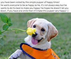 THE SIMPLE PUPPER OF HAPPY TIMES!!!