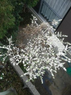 cherry blossom downwards makes me feel novel. Novelty comes from upgrade of seeing experience. Seeing itself is formative action to make custom.