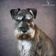 Ben for our Doggie Delights Calendar