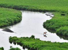 Kushiro Marsh. Looking for more information aboout Hokkaido? Go Visit Eastern Hokkaido. http://ja.visit-eastern-hokkaido.jp/