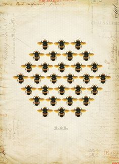 Vintage Bumble Bees Honeycomb on French Ephemera Print