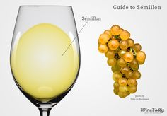 "Semillon wine in a glass with grapes Could we say ""the OTHER white wine""?? :-)"