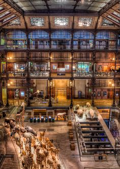 The Natural History Museum of Paris, France. There is a menagerie, a Noah's Ark, that runs through the museum , life size, no less.