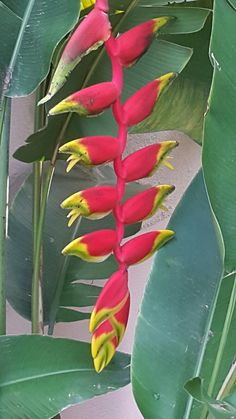 Birds Of Paradise Plant, Vegetables, Flowers, Plants, Art, Vegetable Recipes, Plant, Royal Icing Flowers, Flower