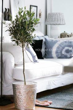 Olive tree HOUSE of IDEAS http://myhouseofideas.blogspot.de/