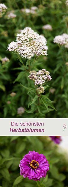 Iris wichtige Infos  Tipps Garten Pinterest