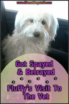 Check out our new blog post! Got Spayed and Betrayed - Fluffy's Visit to the Vet #dogs #humor #dogsfunnyvet