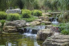 pond and waterfall in suburban chicago, gardening, outdoor living, ponds water features, A waterfall helps to aerate the pond and drown out nearby traffic noise
