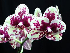 Beautiful orchids from Hawaii courtesy of Irish Jim marketing www.facebook.com/irishjimmarketing