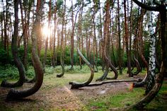 The Crooked Forest is located outside Nowe Czarnowo in Poland — and to this day, no one knows why the trees are all curved in the same shape. It's assumed that the 400 pine trees were planted in this grove around 1930, possibly to produce naturally curved timber for boats. But to this day, the forest remains a mystery.
