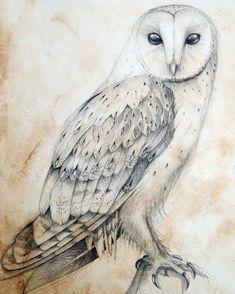 @CinziaMarottaArtist posted to Instagram: Barn owl on antiqued paper #barnowl #owl #pencildrawing #pencilart #natureartwork   #graphiteart #pencil #drawing #birdart #illustration #artistsoninstagram #animalartist #artsharing #art_realistic #arts_promote #artspace #artbuyers #contemporaryartists #art_dailydose #artcollectors #artnews #artinfo #originalartwork #artofinstagram #instaart #instaartwork #instaartoftheday #drawingoftheday #sketch #instaartistic