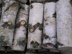 Birch wood Fresh Rolls, Birch, Wood, Ethnic Recipes, Woodwind Instrument, Timber Wood, Wood Planks, Trees, Woodworking