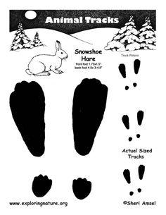 snow shoe hare Art Wall Kids, Art For Kids, Inference Activities, Snowshoe Hare, Arctic Hare, Polar Animals, Animal Tracks, Preschool Crafts, Preschool Winter