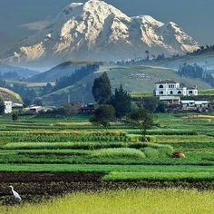 El Chimborazo tan majestuoso