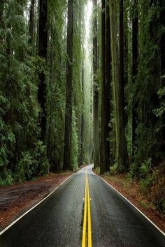 Avenue of the Giants, Humboldt County, Redwoods State Park, California. State Parks, Places To Travel, Places To See, Beautiful World, Beautiful Places, Trees Beautiful, Humboldt Redwoods State Park, Redwood Forest, Parcs