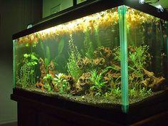 30 gal fish tank