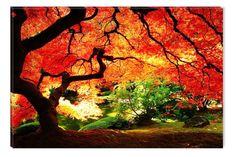 Amazon.com - Red Maple Canvas Wall Art Print, 5 Stars Gift Startonight Nature 23.62 X 35.43 In -
