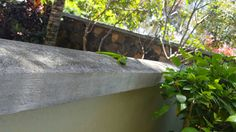Mauritian green lizard gecko