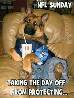 The German Shepherd.... my kind of dog!   LOL