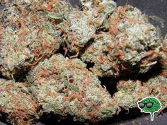 orange kush marijuana strain will cure more than the common cold