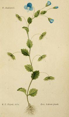 1 - Tentamen florae Basileensis : - Biodiversity Heritage Library