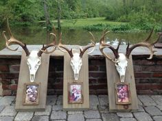 european deer mount with pictures Informations About european deer mount with pictures Pin You can e Deer Hunting Decor, Deer Camp, Deer Decor, Hunting Girls, Hunting Cabin, Deer Mount Decor, Archery Hunting, Hunting Stuff, Women Deer Hunting
