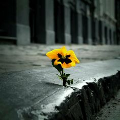 Positive Inspirations  When one flower grows through the cement on the sidewalk it does so with determination and strength! You are just like that flower and can also beat unthinkable odds in your own life. Be determined and strong!