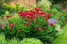 plantes aromatiques dans le jardin - pavots, lavande et herbes