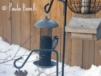 Embrace Winter and Count Bird  Cornell's Project Feeder Watch