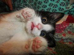 gatito sorprendido