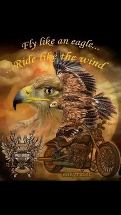 Fly like and eagle Motorcycle Humor, Motorcycle Shop, Harley Davidson Quotes, Harley Davidson Motorcycles, Eagle Wallpaper, Eagle Pictures, Bike Pic, Biker Quotes, Biker Sayings